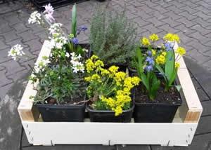 Hofgr n berlin for Pflanzen laden berlin